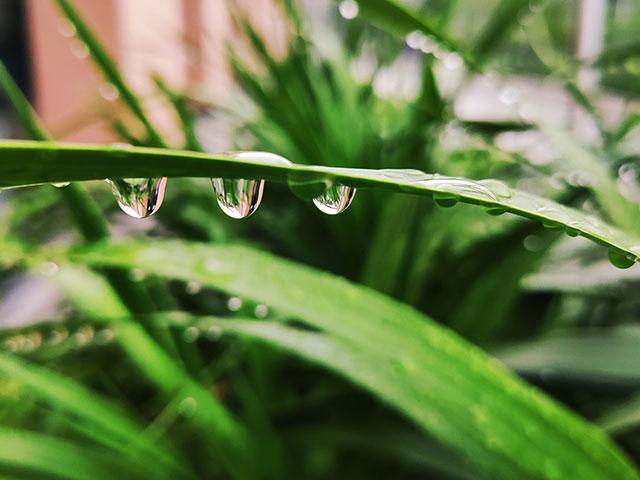 天然エキスのイメージ画像